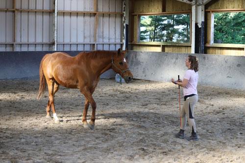 perseverance en equitation